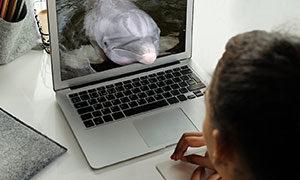 IDC Dolphin Virtual Visits